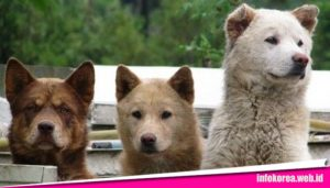 Orang Korea Suka Makan Anjing