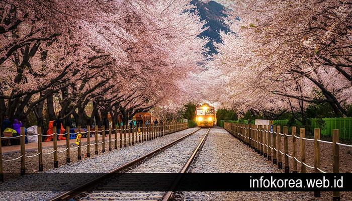 Beberapa Tempat Wisata di Korea Selatan yang Wajib Didatangi